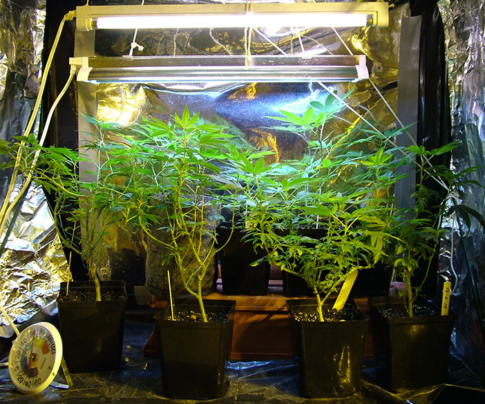 marijuana grow rooms