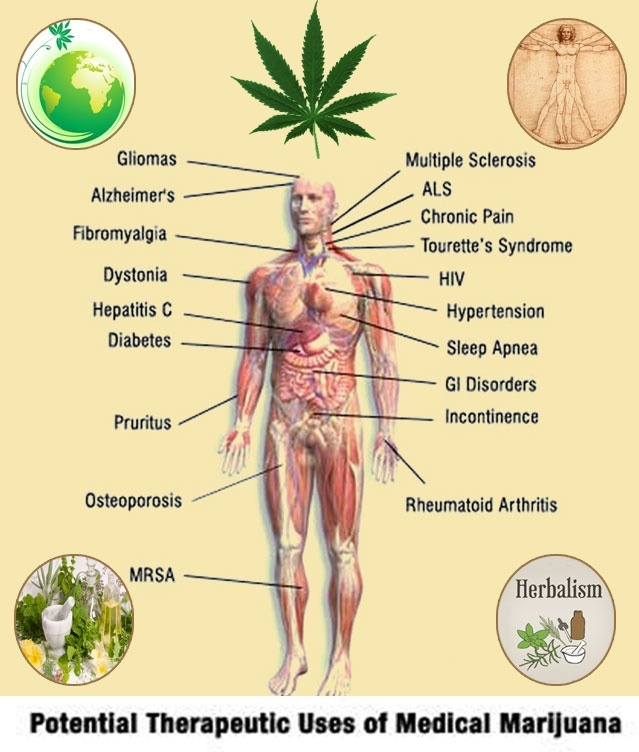 Marijuana Medical Benefits Vs. Risks | Green CulturED eLearning ...