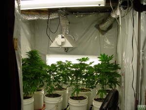 Grow Room Part 37