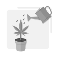 Cannabis-Water-and-Irrigation-Training